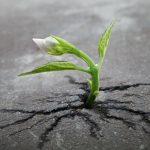Lottare per Crescere
